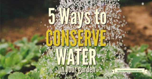 sprinkler on grass with text overlay 5 ways to conserve water in your garden