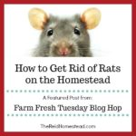rat with text overlay How to Get Rid of Rats on the Homestead