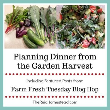 garden harvest & salad with text overlay Planning Dinner from the Garden Harvest