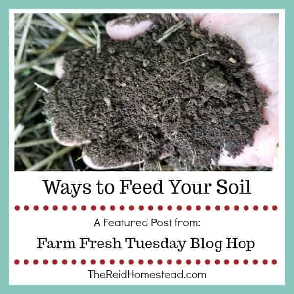 Ways to Feed Your Soil