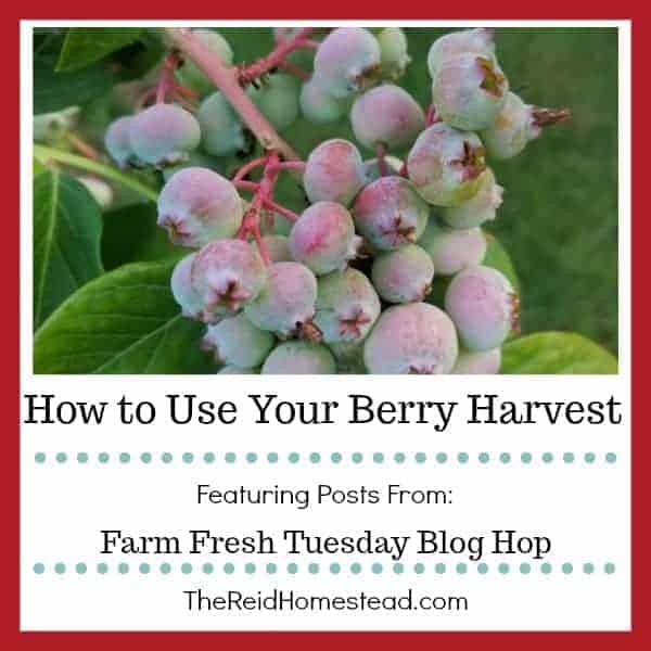 How to Use Your Berry Harvest