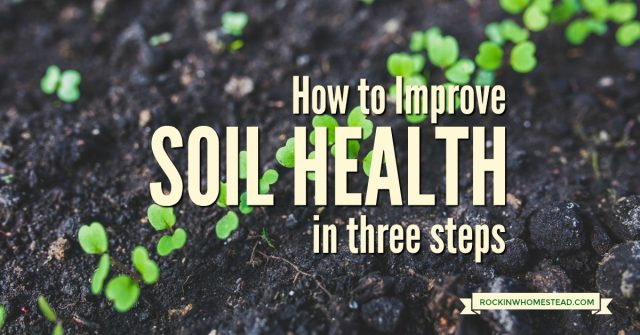 seedlings in soil with text overlay How to Improve Soil Health in Three Steps