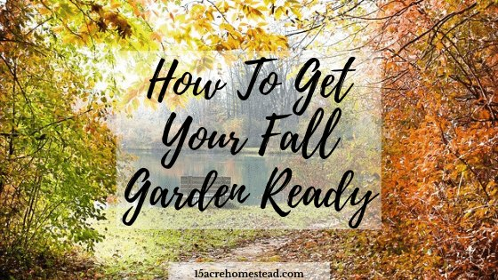 trees with fall colored leaves with text overlay How to Get Your Fall Garden Ready