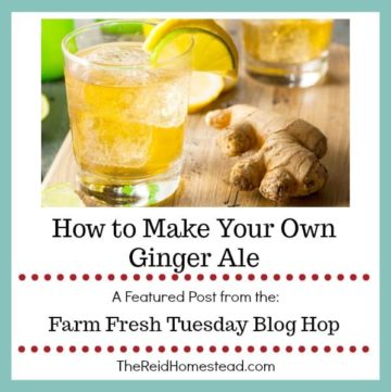 glass of ginger ale and nob of ginger with text overlay How to Make Your Own Ginger Ale