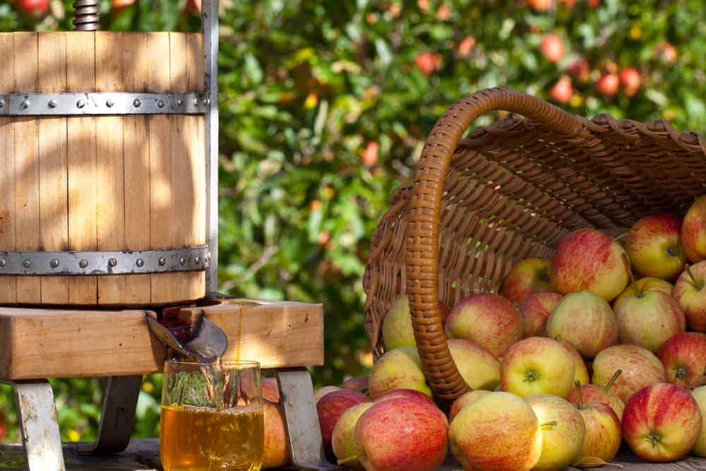 apple cider press with glass of apple cider beneath, with a basket of apples on the right side of it