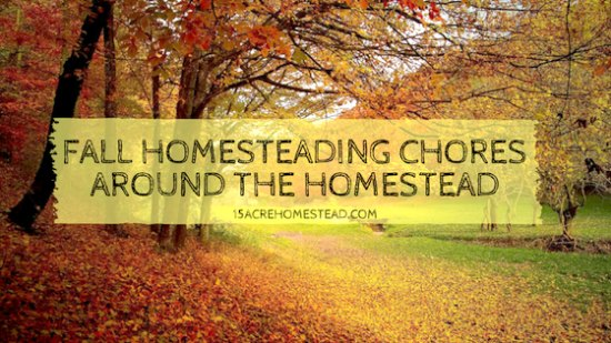 trees with fall color leaves with text overlay fall homesteading chores around the homestead