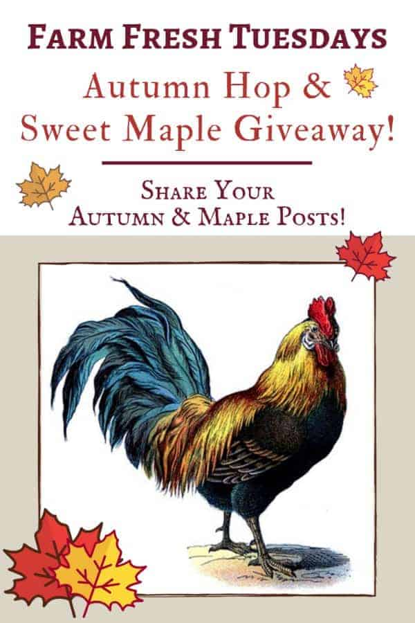 rooster with maple leaves with text overlay Farm Fresh tuesdays Autumn Hop & Sweet Maple Giveaway!