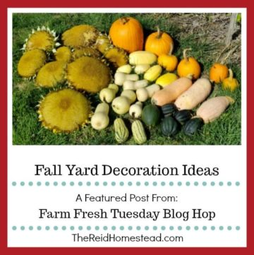 fall harvest of sunflowers pumpkins and winter squash with text overlay Fall Yard Decoration Ideas