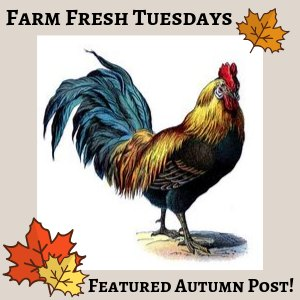 Rooster with fall leaves with text overlay Farm Fresh tuedays Featured Autumn Post