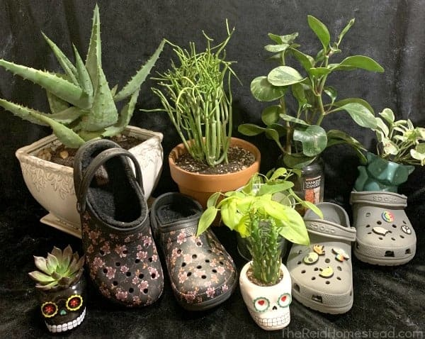 arrangement of crocs and houseplants with black background