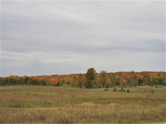 grassy field with trees in fall color beyond
