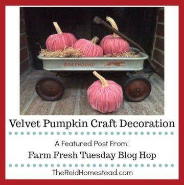 velvet pumpkins in wagon with text overlay A featured image from the farm fresh tuesday blog hop Velvet Pumpkin Craft Decoration