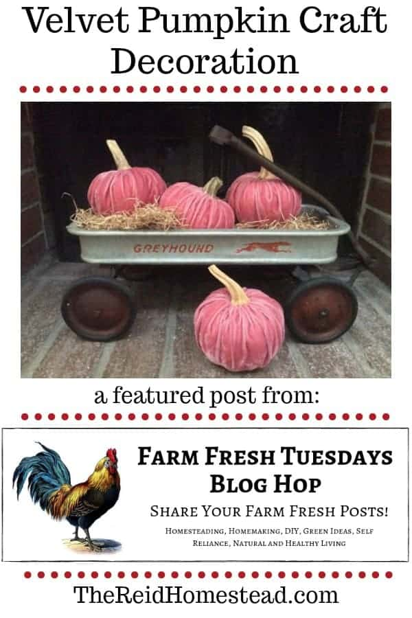 velvet pumpkins in wagon with text overlay a featured post from our farm fresh tuesday blog hop, how to make simple NO SEW diy velvet pumpkins