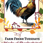rooster with pilgrim hat with text overlay Farm Fresh Tuesday 3 Weeks of Thanksgiving! Give Thanks & Share Your Holiday posts!