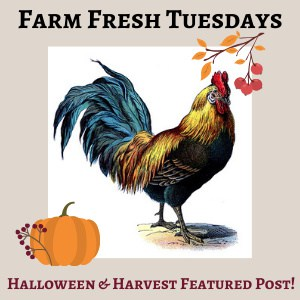 rooster with pumpkin, with text overlay Farm Fresh Tuesday Halloween & Harvest Featured Post!