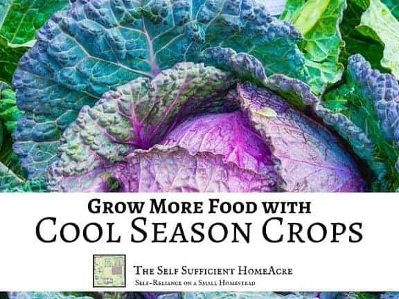 purple cabbage with text overlay grow more food with cool season crops