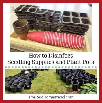 planting trays with seedling pots and large gardening pots on the lawn, with text overlay How to Disinfect Seedling Supplies and Plant Pots