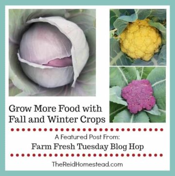 purple cabbage, orange cauliflower head and purple cauliflower head with text overlay Grow More Food with Fall and Winter Crops