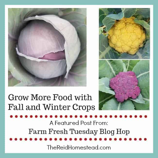 Grow More Food with Fall and Winter Crops