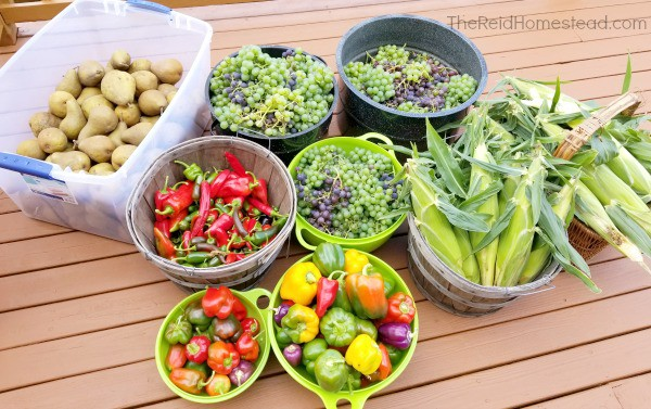 a late summer harvest including pears, peppers, grapes and corn