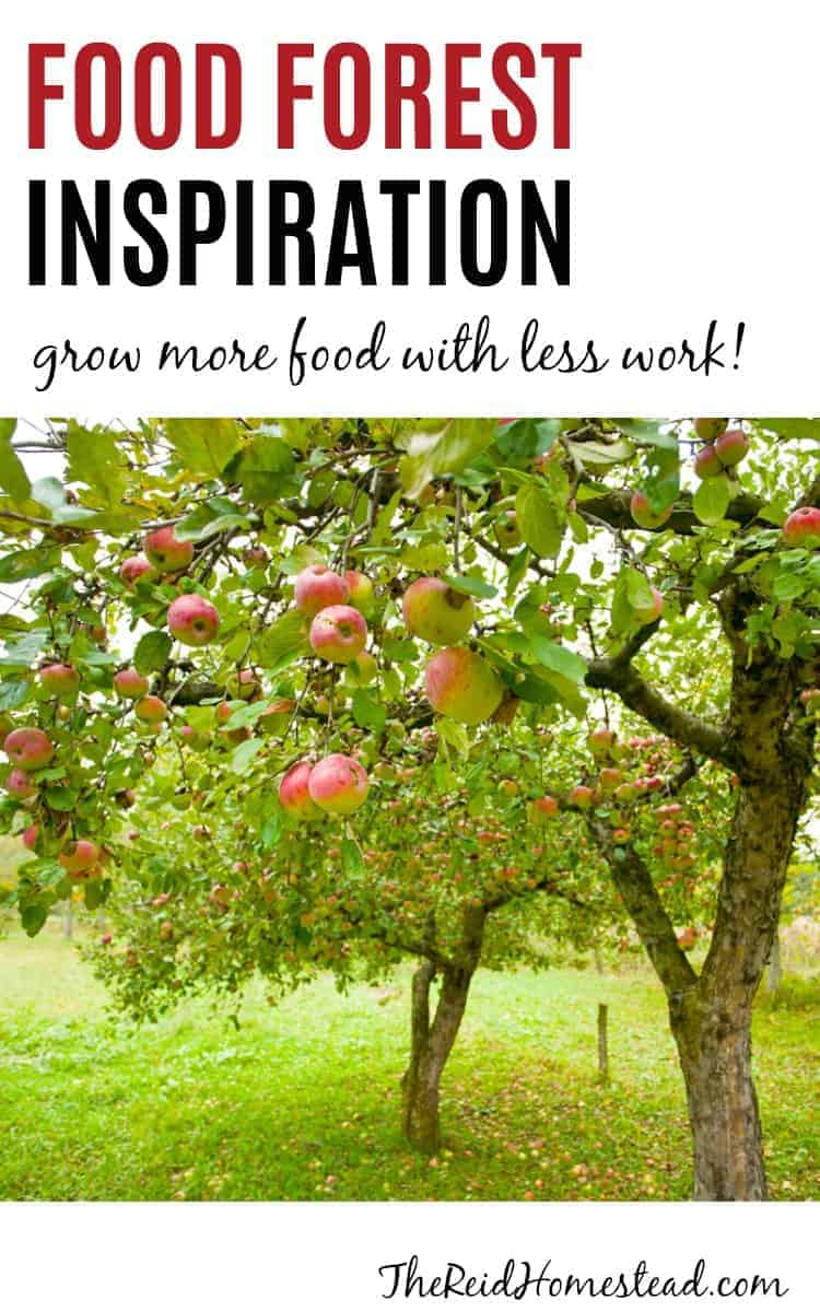 apple trees with ripe fruit with text overlay Food Forest Inspiration