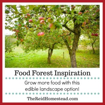 apples trees with ripe fruit with text overlay Food Forest Inspiration