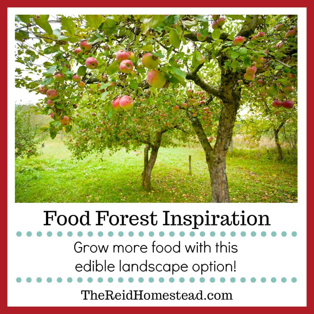 Food Forest Inspiration