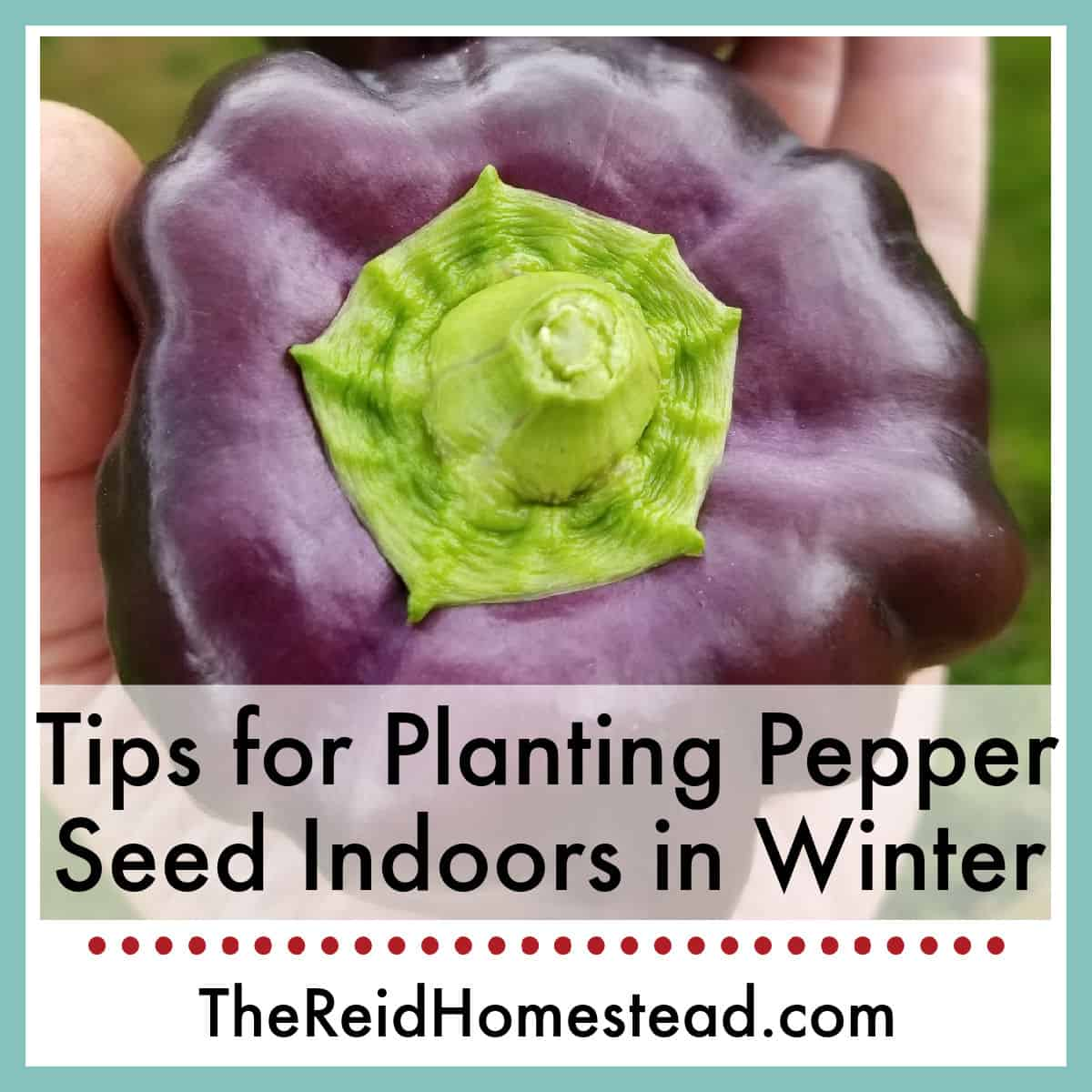 Seed Starting 101: Planting Pepper Seed