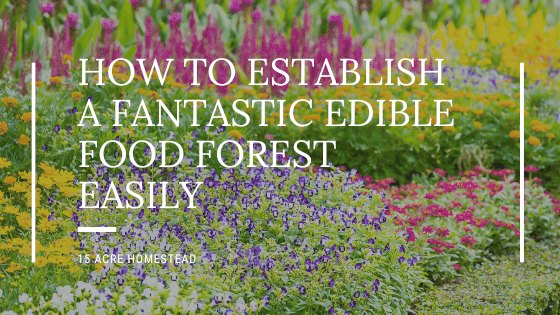 garden in background with text overlay How to Establish a Fantastic Edible Food Forest Easily