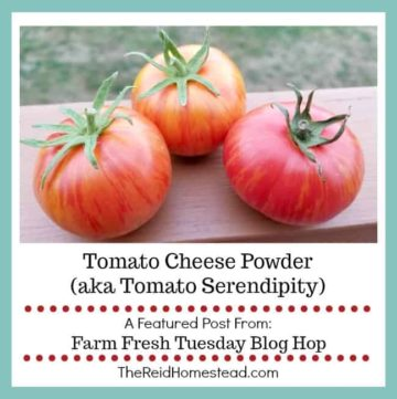 3 ripe tomatoes with text overlay Tomato cheese powder aka tomato serendipity