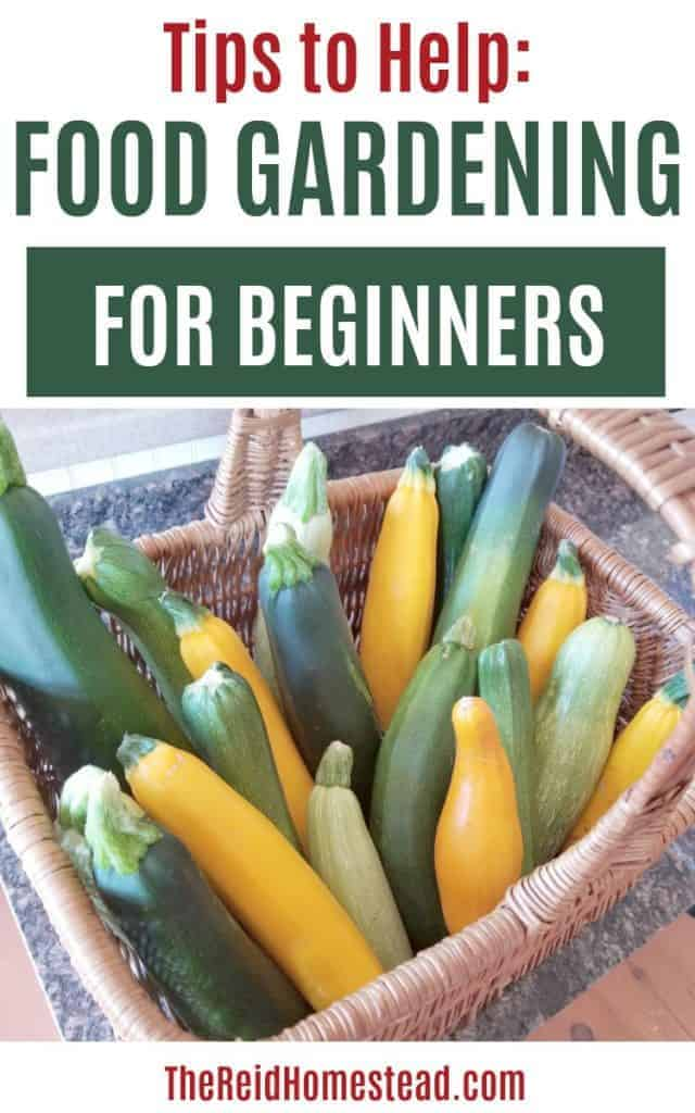 basket of zucchini and summer squash with text overlay Tips to Help Food Gardening for Beginners
