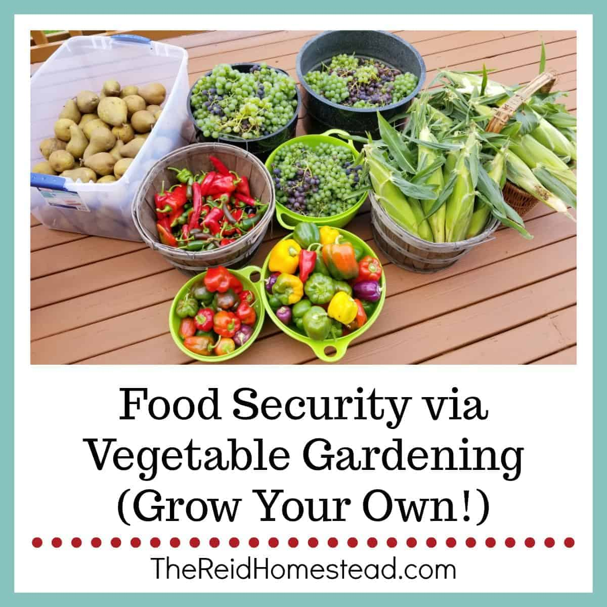 Food Security via Vegetable Gardening