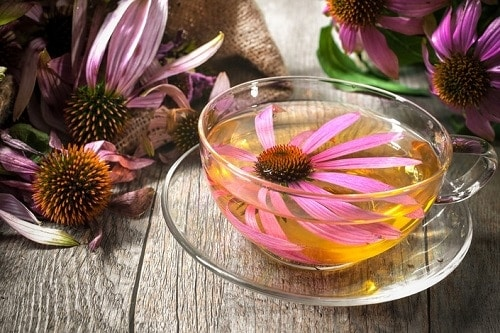 cup of tea with an echinacea flower floating in it