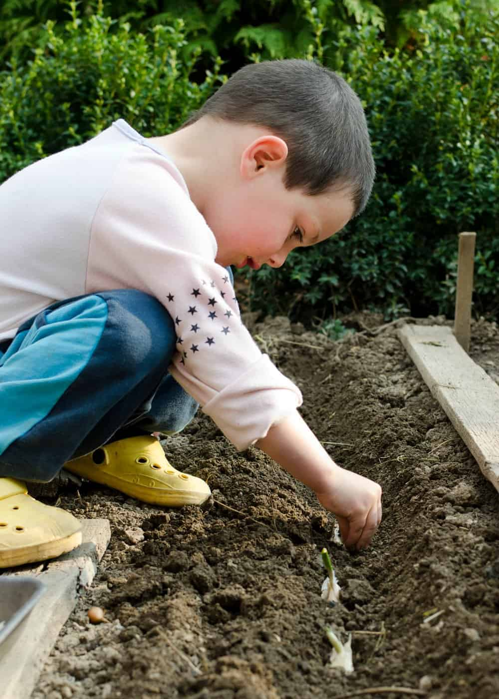 young boy planting garlic in the garden