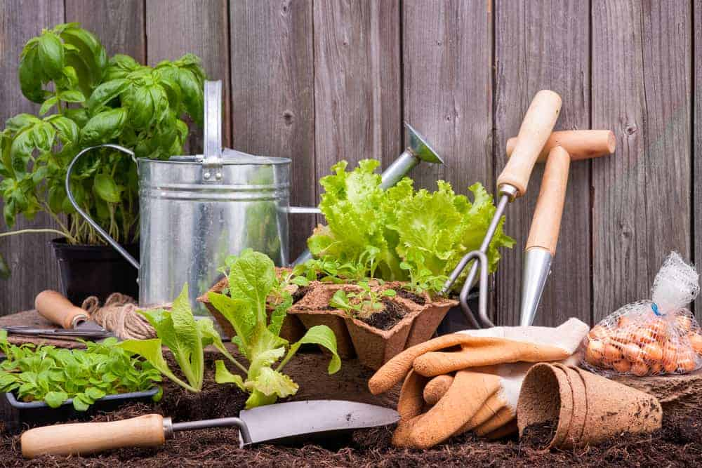 gardening tools and gloves with plant starts on soil
