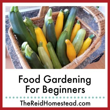 basket full of zucchini and yellow summer squash with text overlay Food Gardening for Beginners