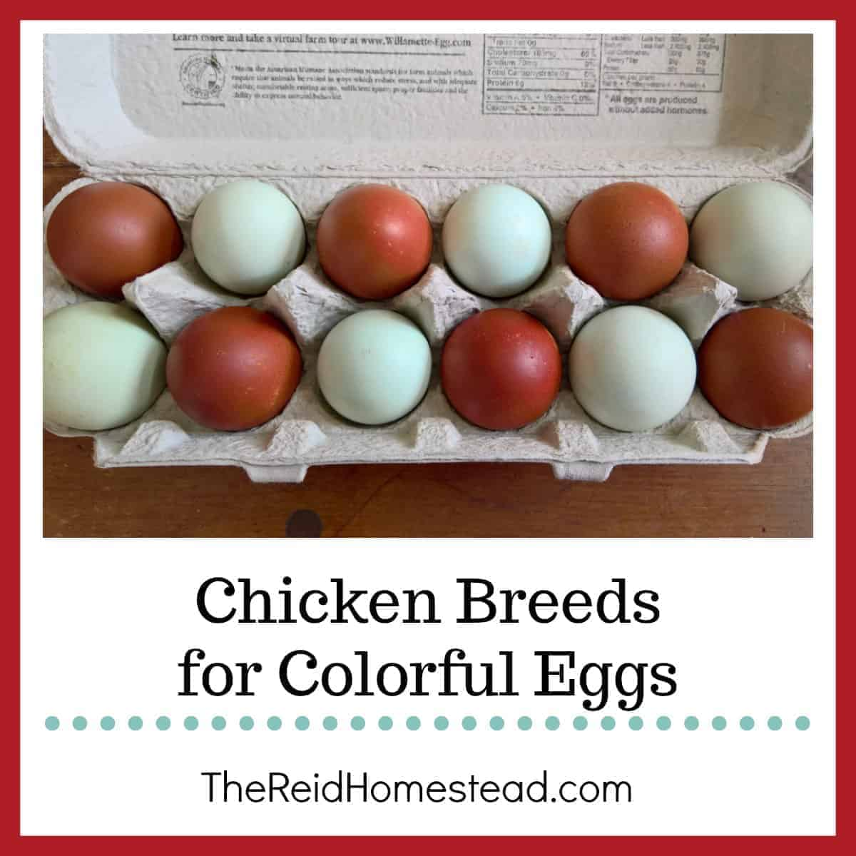 Chicken Breeds for Colorful Eggs