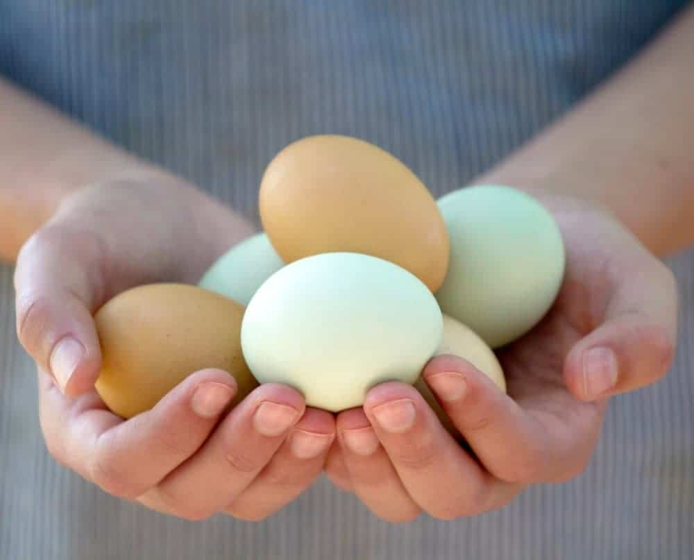 two hands holding an assortment of blue and green eggs
