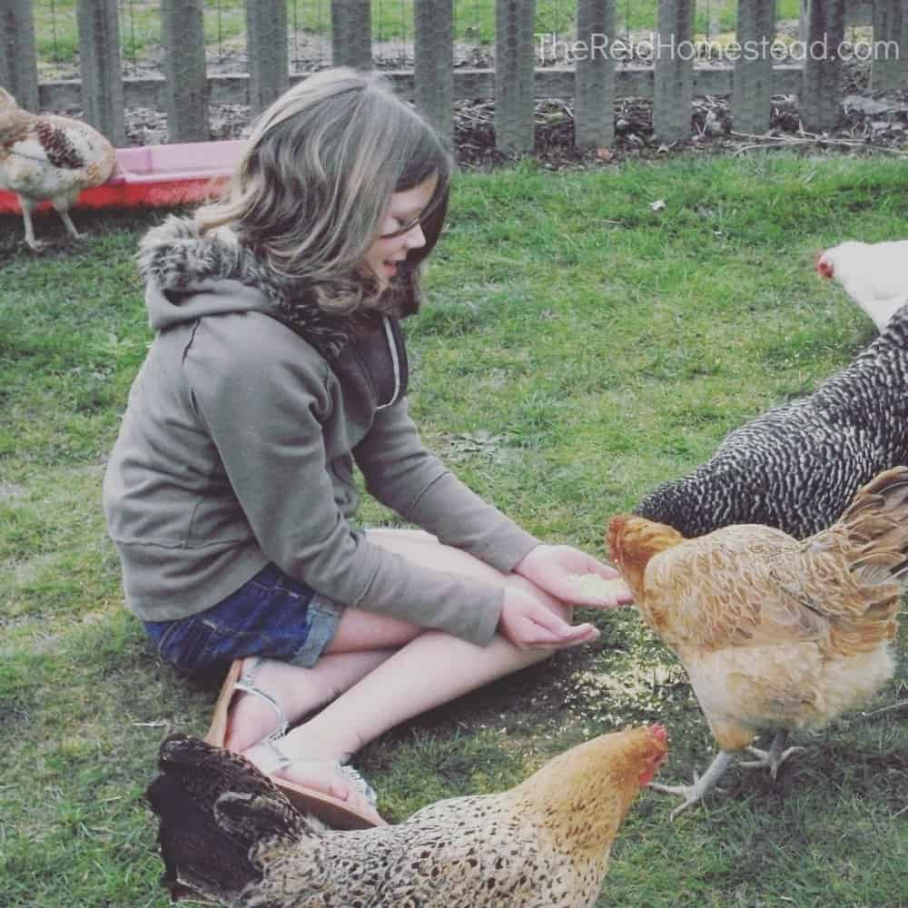 girl sitting on grass feeding chickens from her hands
