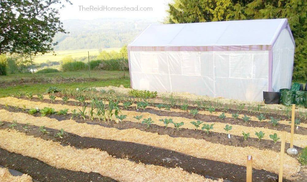 vegetable garden rows prepped for spring planting with greenhouse beyond