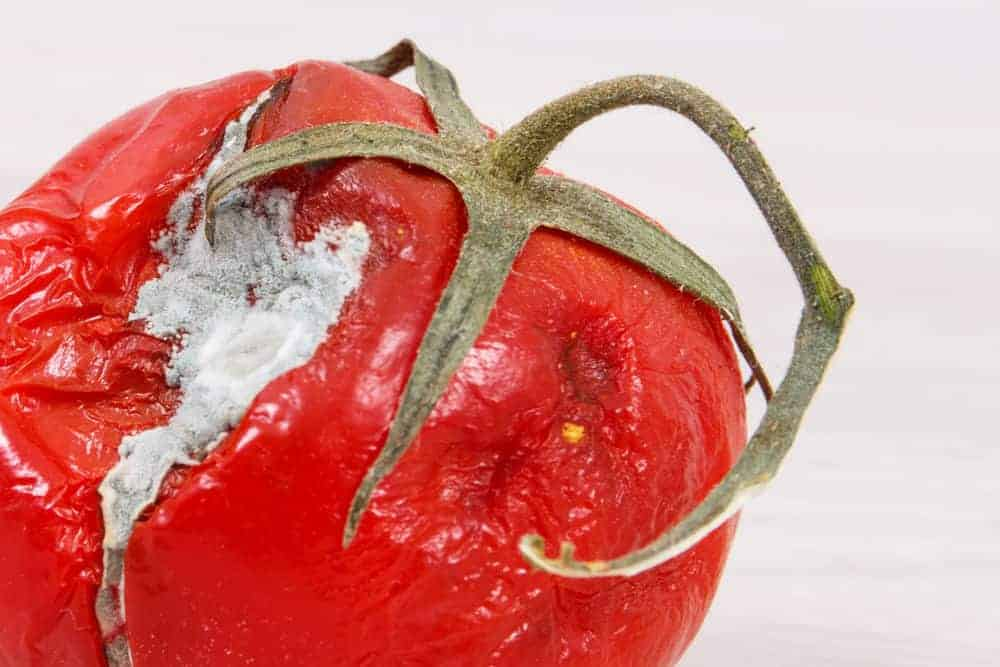 close up of a tomato with a crack in it that has gone moldy