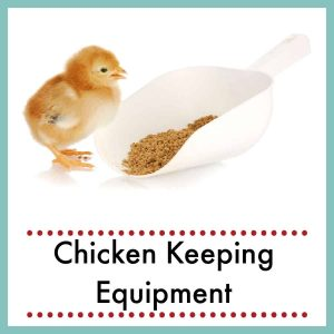 baby chick standing next to huge scoop of feed with text overlay chicken keeping equipment