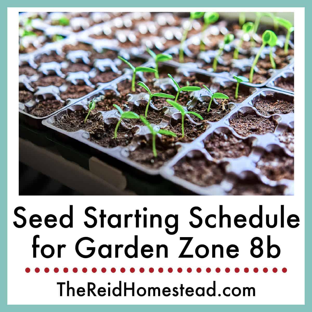 When to Start Vegetable Seeds in Garden Zone 8b